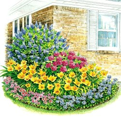 Free Perennial Flower Bed Plans Flowers Healthy