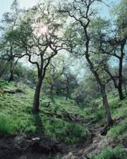 Tree information