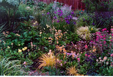 bog garden design