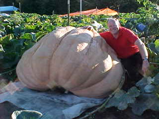 This is a 1420 pound pumpkin!