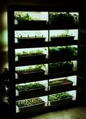 Grow lights help you start gardening earlier