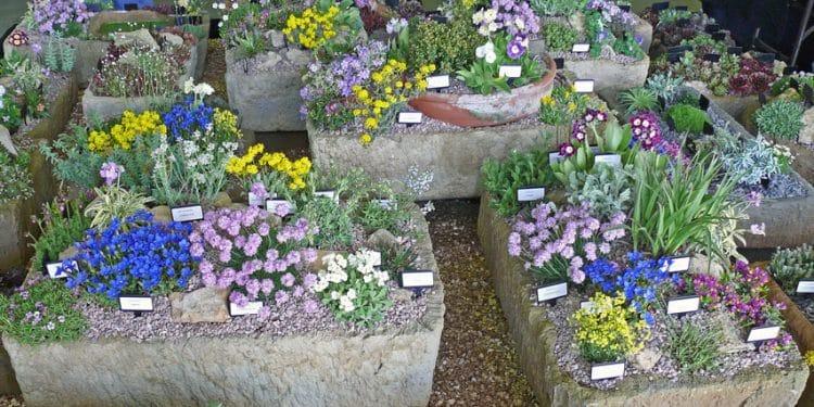 Alpine Container Gardening