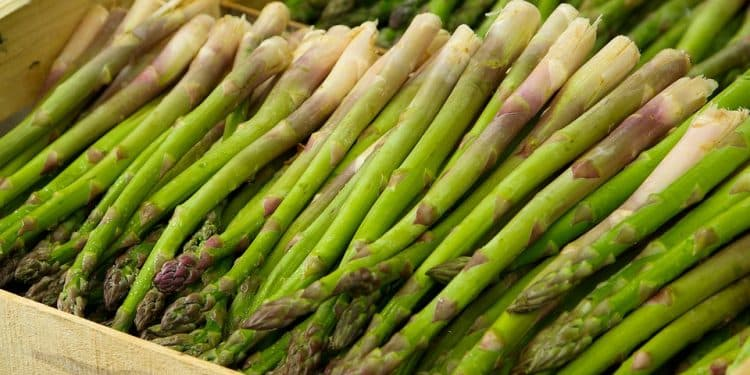 Growing Asparagus planting