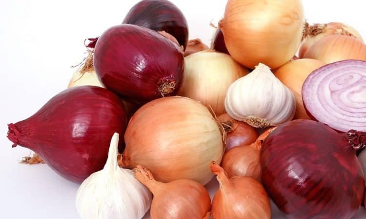 Growing Garlic and Shallots