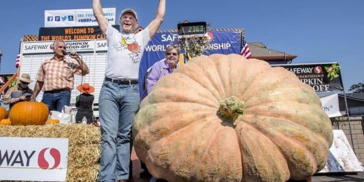Growing Giant Pumpkins
