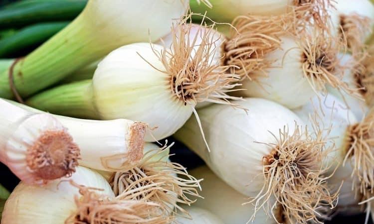 Growing Onions