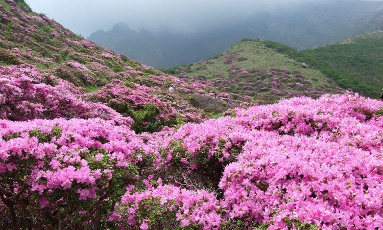 Plants that like Acid Soil Garden