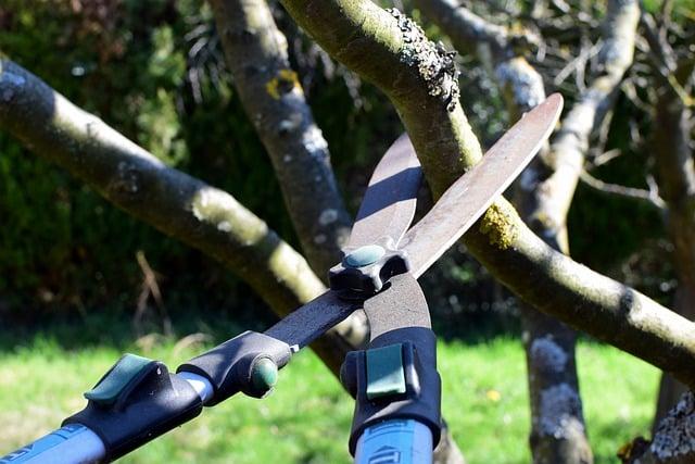 pruning tree shrub