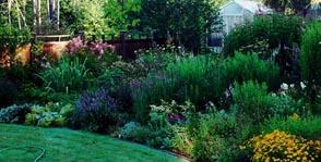 SWORD LILIES  - Gardening
