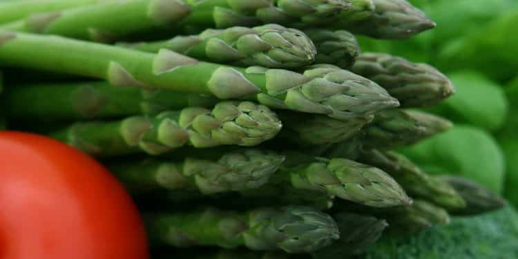 The Vegetable Guide - Asparagus