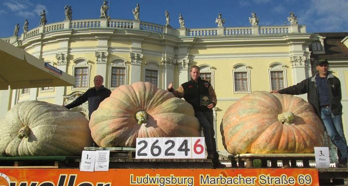 World Largest Pumpkin Records