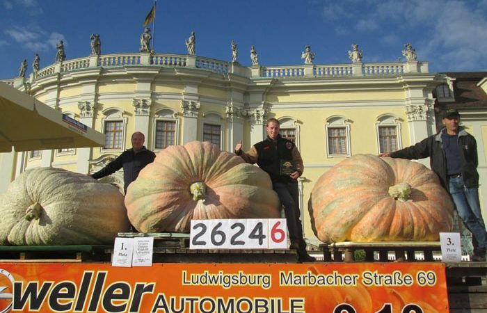 Old World Largest Pumpkin Records
