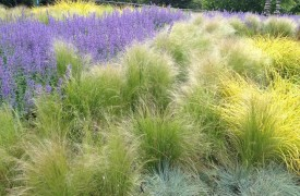 How to plant a perennial garden