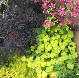 August Gardening