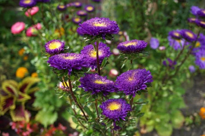 Annual gardening and annual garden deign for Annual garden designs