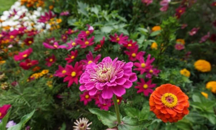 Simple Garden Plan for a Corner Garden