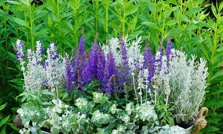 what gardening tasks to do in May