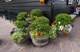 miniature small gardens