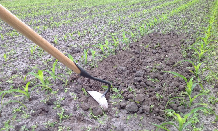 Garden tools for digging and weeding backyard gardener for Power garden digging tools