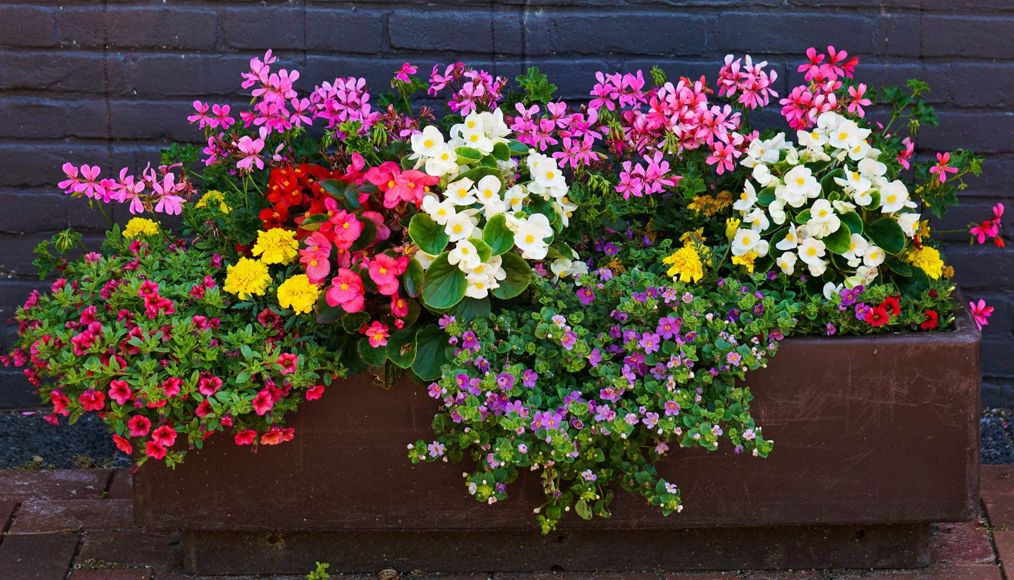 Annual flowers and annual gardens for Annual garden designs