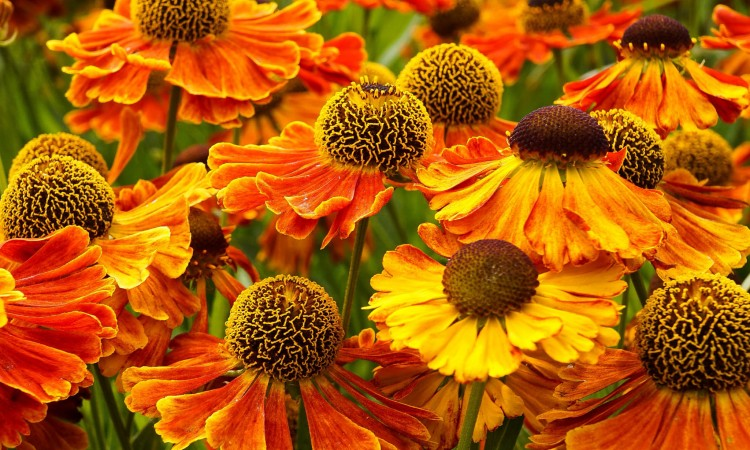 9 Gardening Tips Everyone Needs to Know