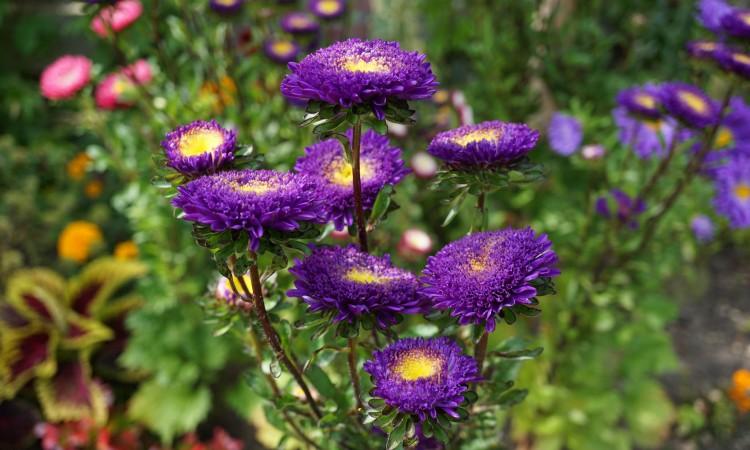 Annual gardening and annual garden design