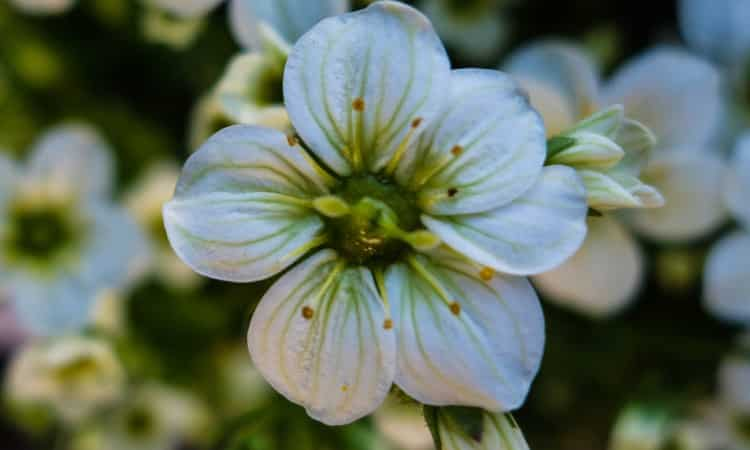 Online Garden Catalogs