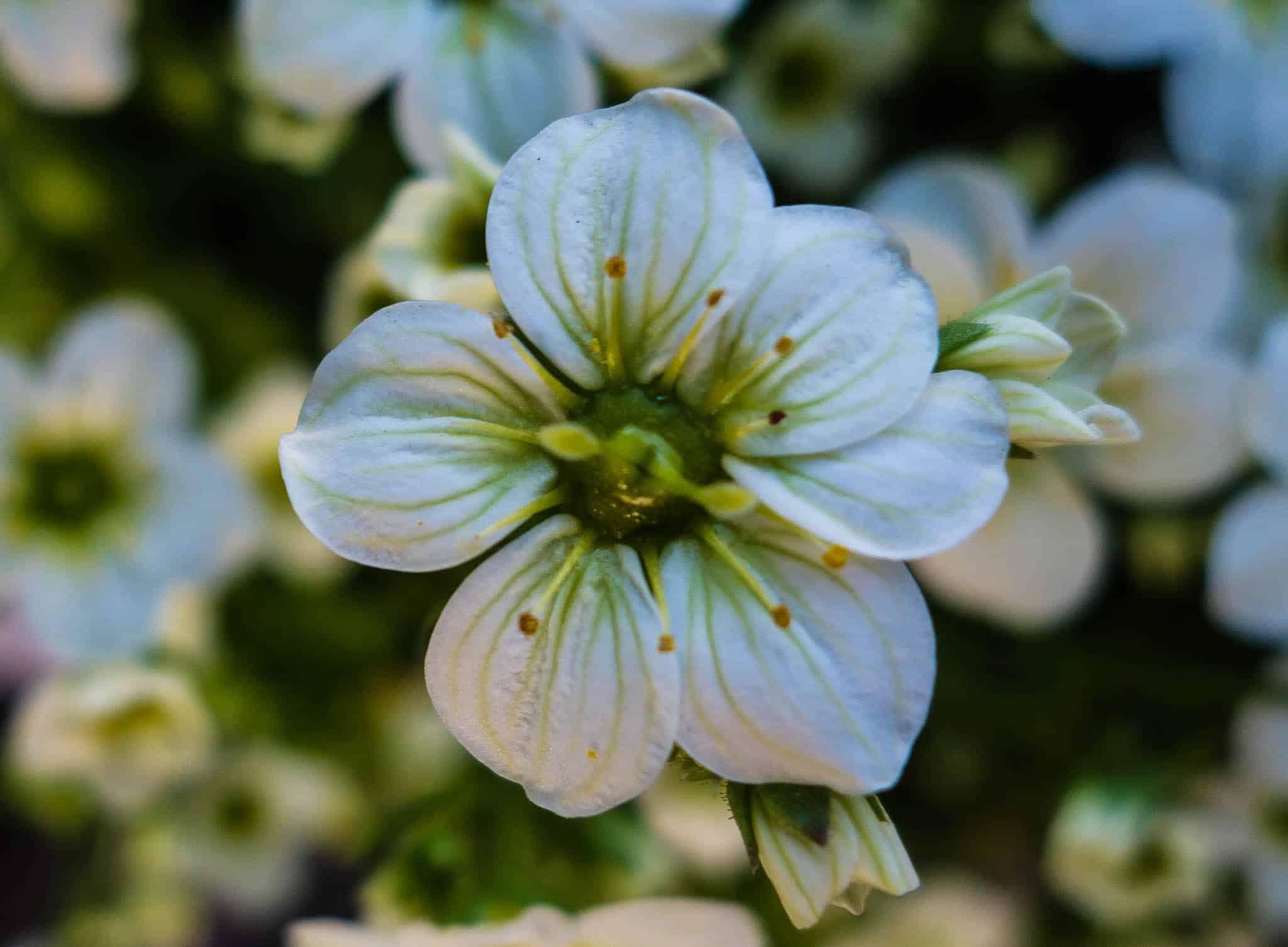 Garden Catalogs Www Listing