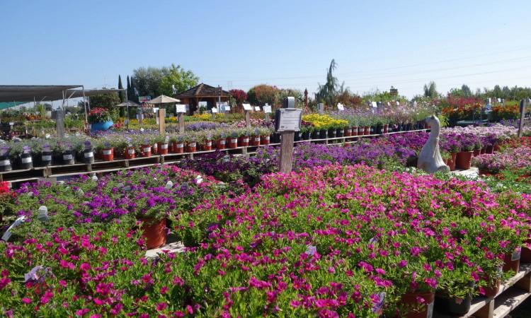 Organic Gardening. Organic Gardening Tips