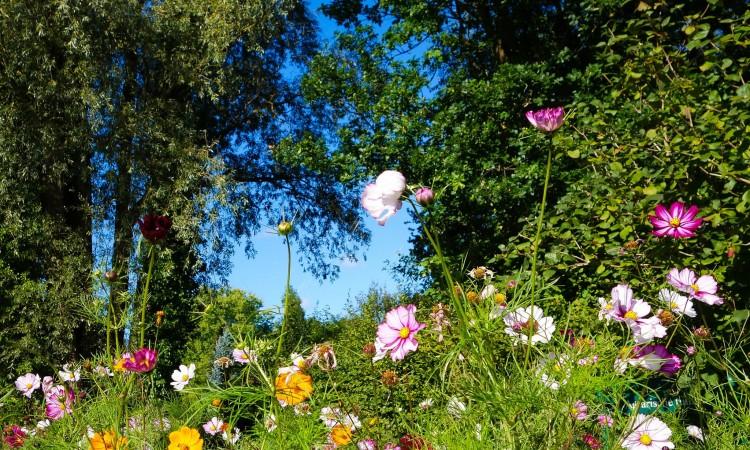Pacific Northwest Mediterranean Garden