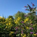 July Gardening