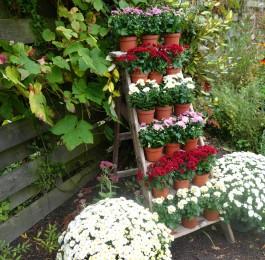 Backyard flower stand