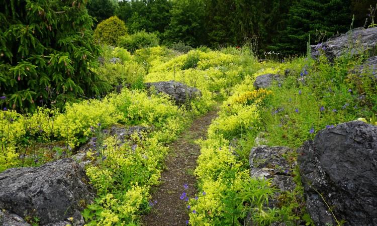 A woodland garden path
