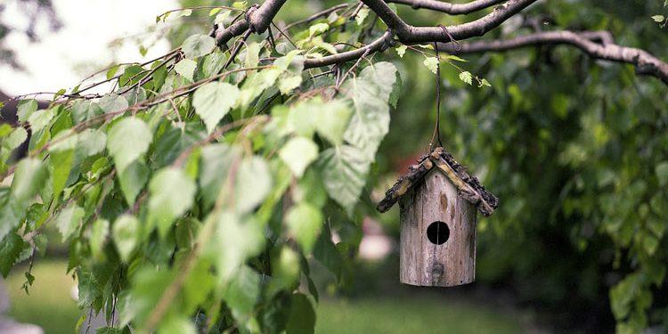 Birds in your garden Bird House design and food