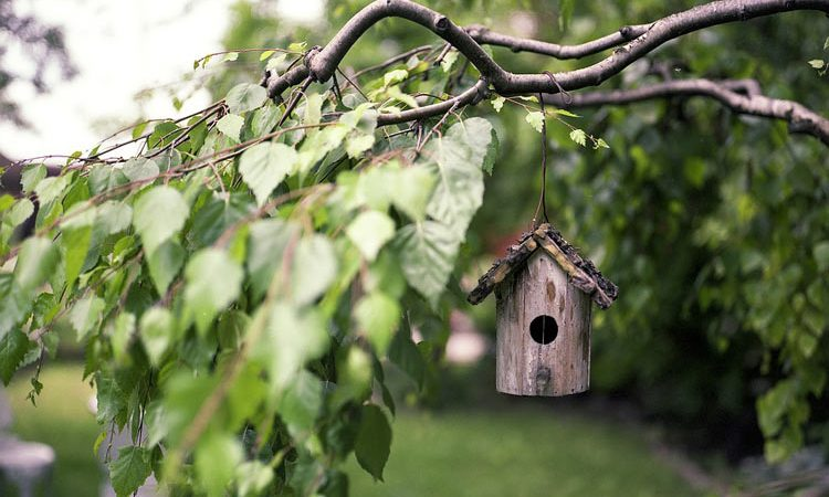 Birds in your garden Bird House design and food