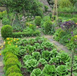 Planning a Kitchen garden