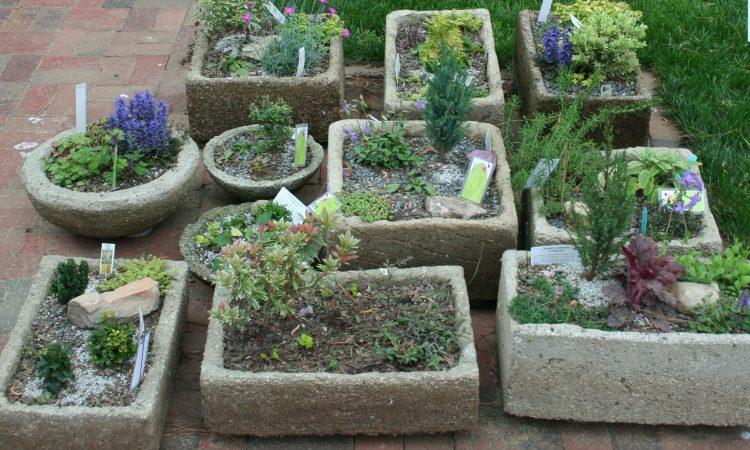 How to plant troughs, Hypertufa, Tufa