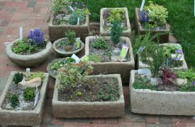 How to plant troughs, Hypertufa, Tufa