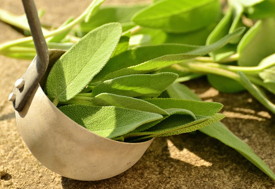 sage, herbs, culinary herbs, healthy, tea herbs, bless you, herbal plant, garden plant, healing, medicinal herbs, kitchen spice, aroma, kitchen sage, garden spice plant, real sage, green, herb, leaves