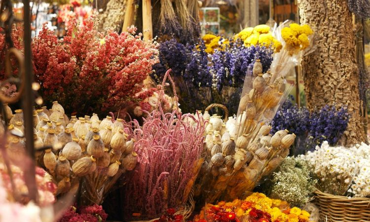 Flowers for drying