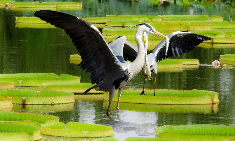 Predators in your Pond