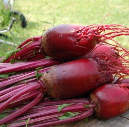 The Vegetable Guide - Beet