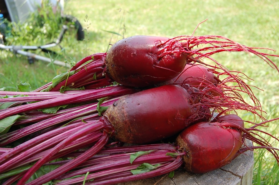 the vegetable guide beet