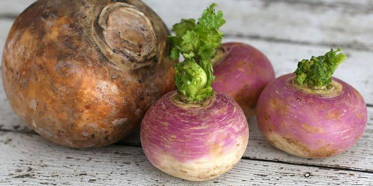 How to grow Turnip Rutabaga