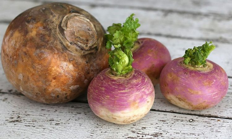 How to grow Turnip Rutabaga