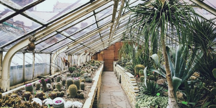 Tips for Cleaning Your Greenhouse