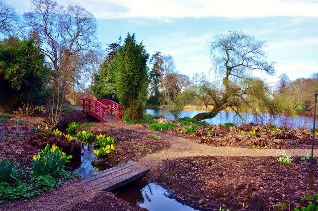 Bog garden Design and Plants