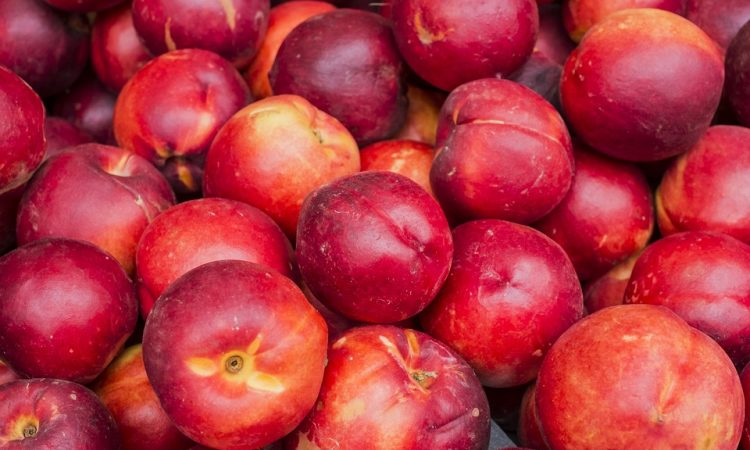 Care for Peach and Nectarine Trees