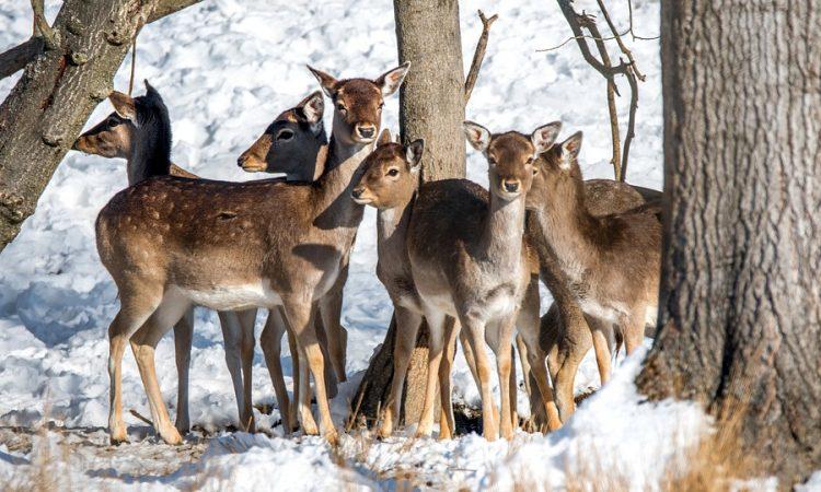 Control Deer in Landscapes