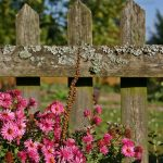 How to select a garden fence